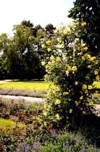 Чехия. Петршинские сады