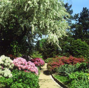 Арборетум Эллерхоп-Тензин/Arboretum_Ellerhoop/рододендроны