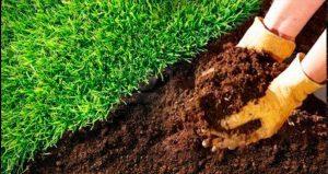 подкормка органическими удобрениями
