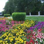Цветник вдоль дороги из бархатцев, петуний и кохии