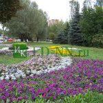Цветники из петунии, кохии и цинерарии