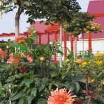 Портфолио - Частные сады