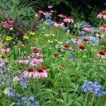 Пейзажный стиль в цветниках